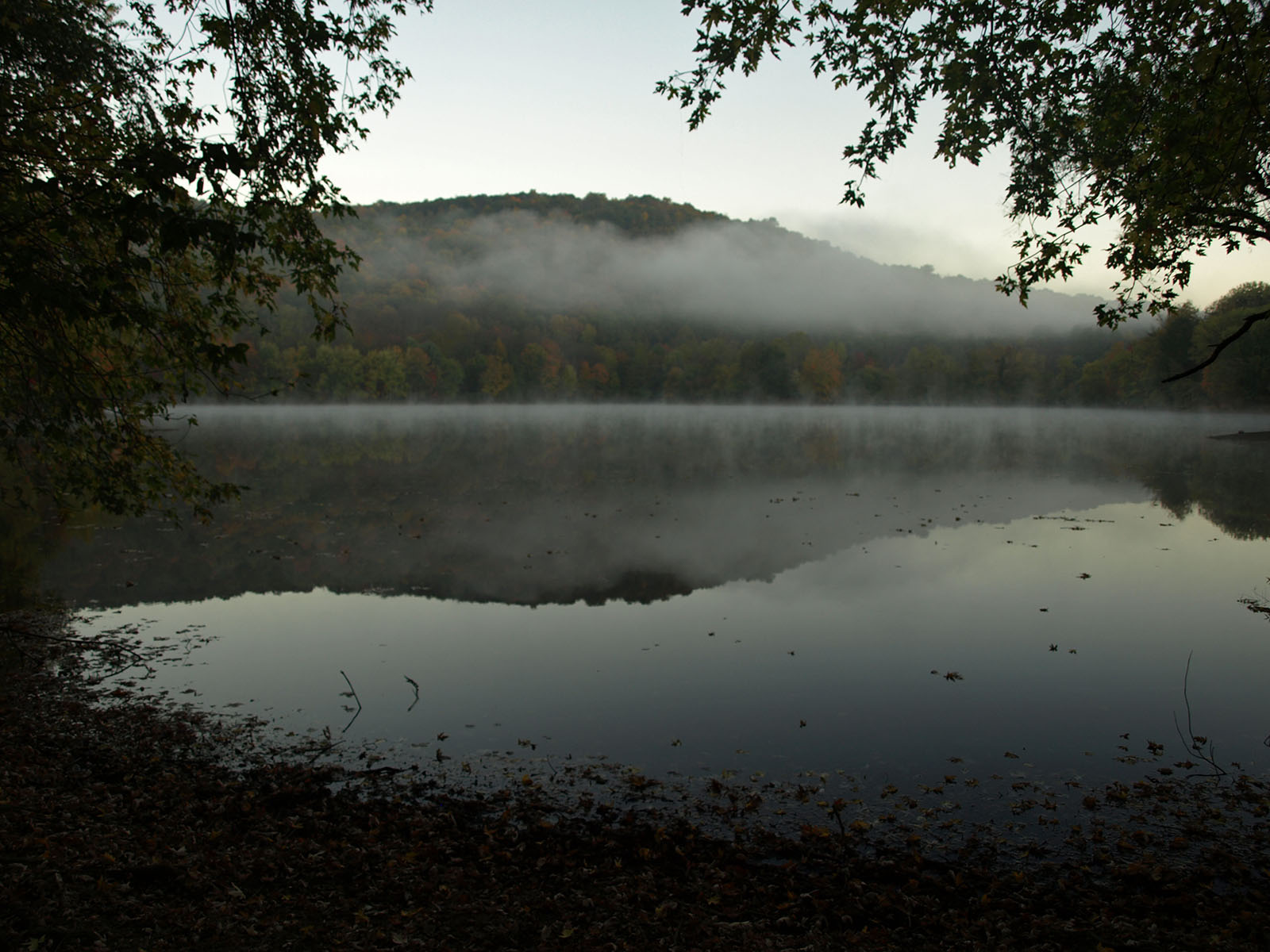 Scarlett Oak Pond Morning Mist