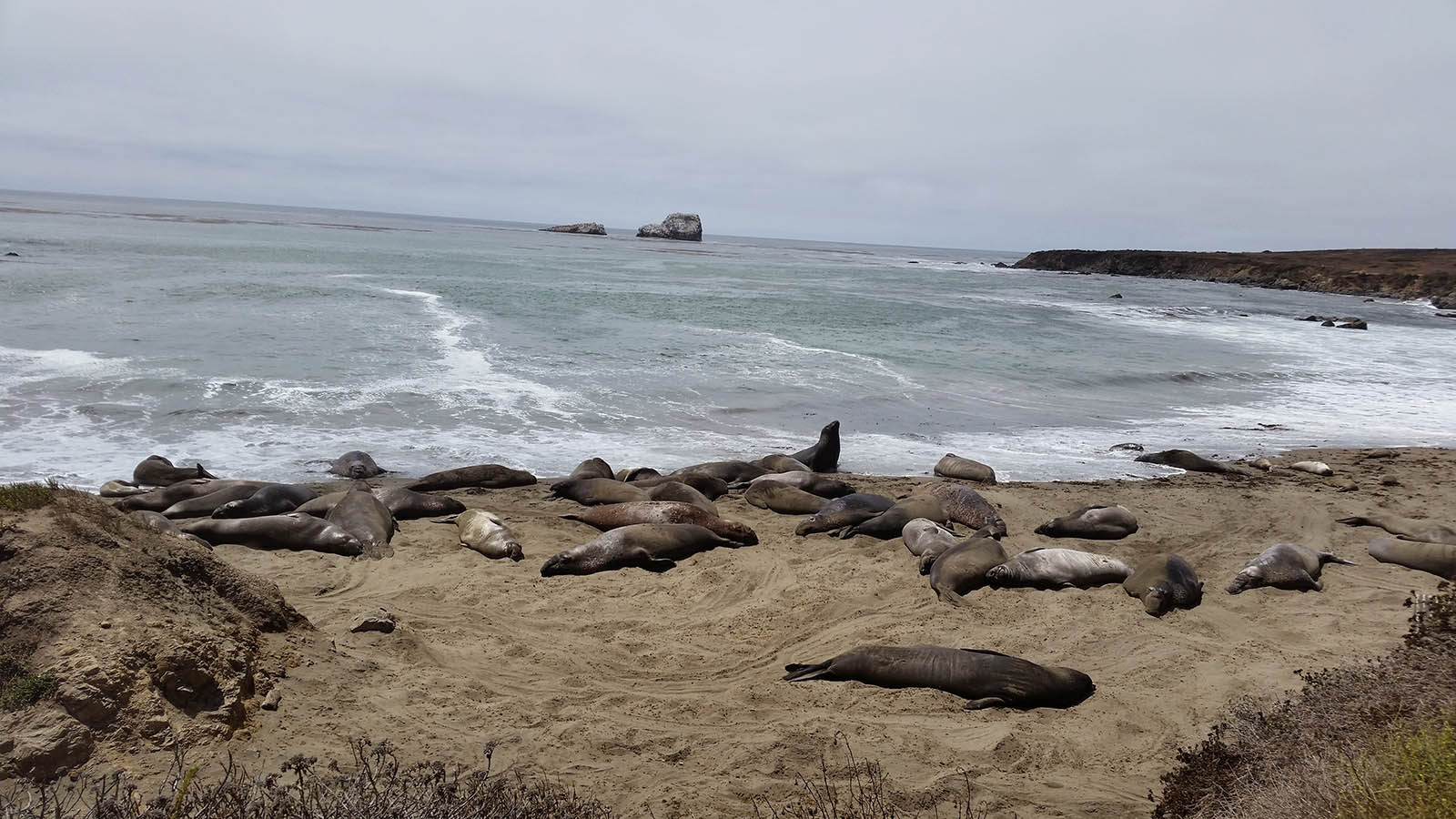 38-california-elephant-seal